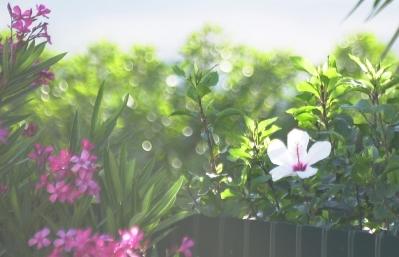 Kukkia vastavaloon, Portugal, Algarve