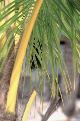 Palm tree, Mexico, Yucatan peninsula