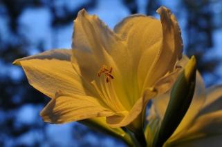 X-Mas flowers, Casa Marina Airisto