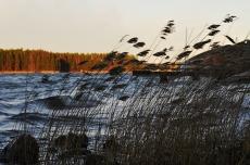 Autumn wind, Casa Marina Airisto