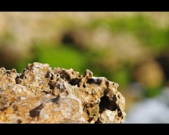 Soft colours of limestone