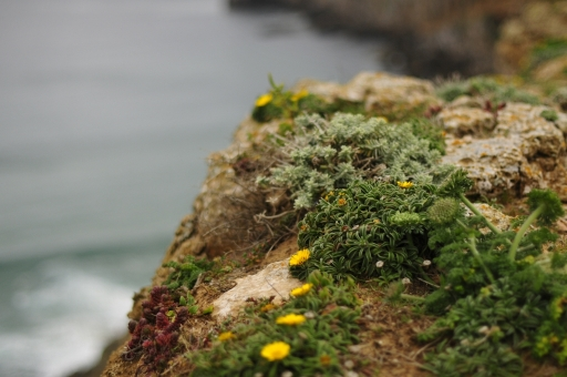 Nature forms its own garden, Praia Rocca Portugal