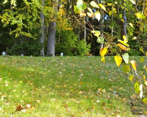 Autumn leaves, Casa Marina Airisto