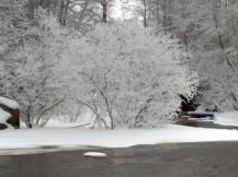 Frozen trees, Nurmijärvi Southern Finland