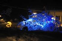 Trees and winter lights, Casa Marina Airisto