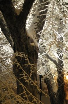 Trees with snow cap