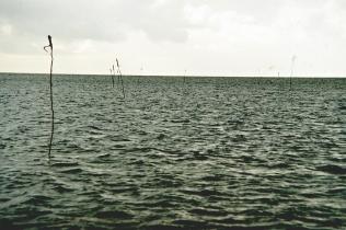 Waddeneilanden merimerkkejä