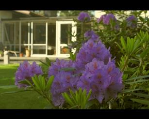 Vanha Rododendron, Casa Marina Airisto