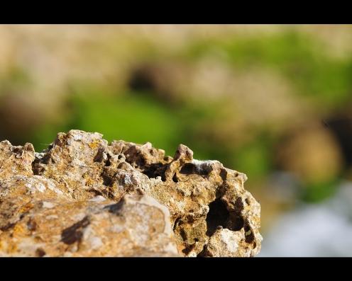 Kalkkikiven pehmea vari