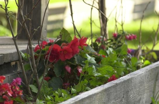Kukkalaatikko Hiekkaharju