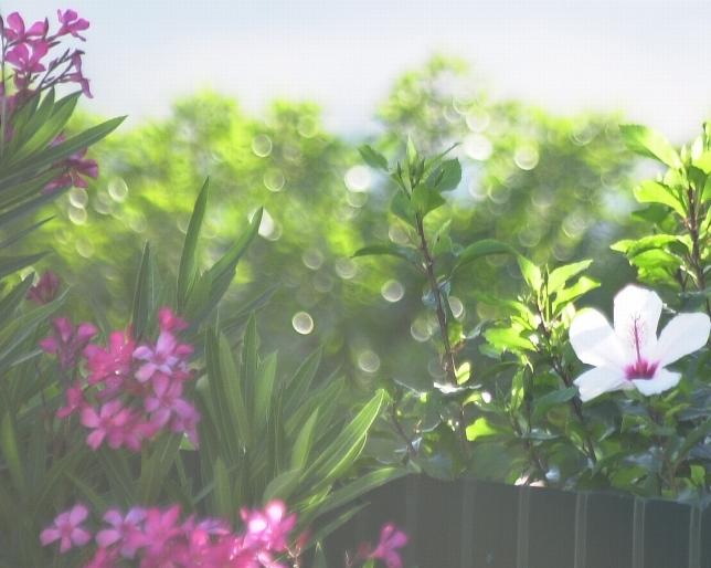 Kukkia vastavaloon aamulla