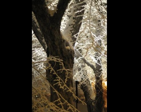 Puut talvella