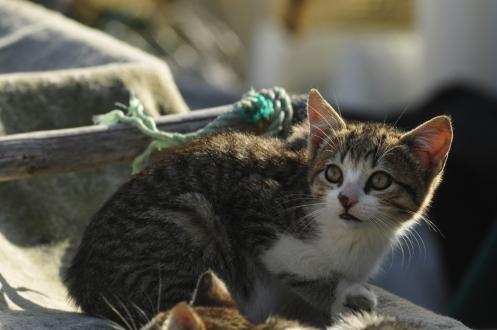 Sagresin kalastajan kissa