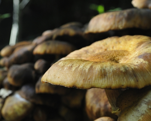 Syksy tulee sienien kera