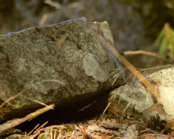 Syksyiset kivet