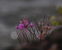 Syyskesan kukkia