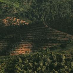 _DSC4447.crop