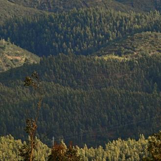 Metsän varjoja.crop