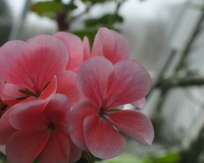 kukkia 2010_1
