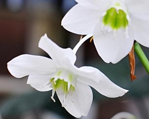 Kukkia kevat