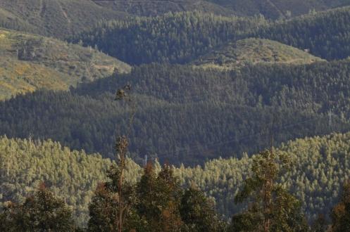 Metsa kauniita muotoja