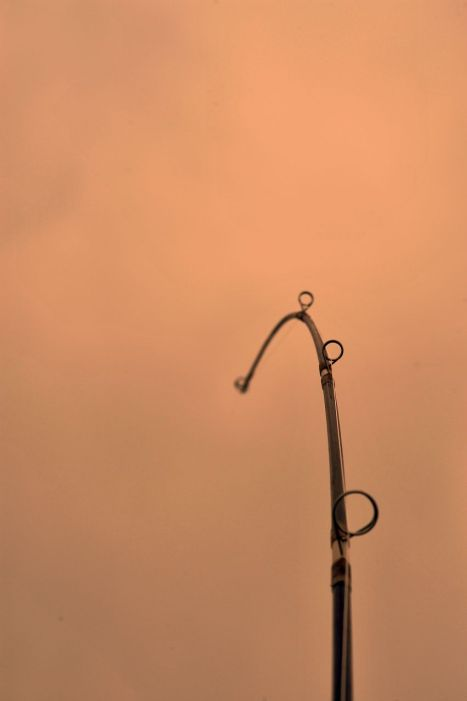 Fishing rod in evening sunset