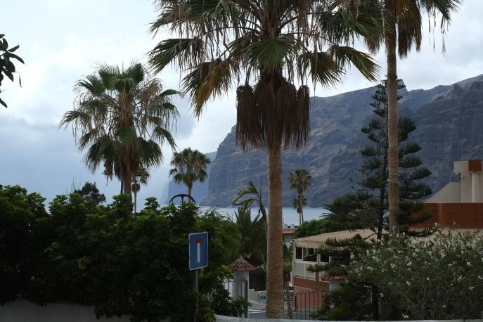 Palms trees at Los Gigantes