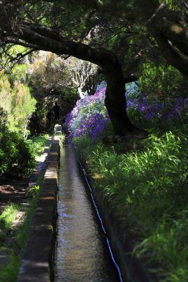 Beautiful vegetation in Levadas in Madeira