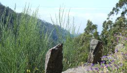 Vegetation of the steep slopes