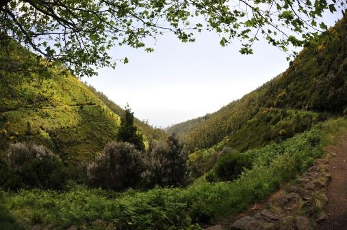 Madeira vegetation