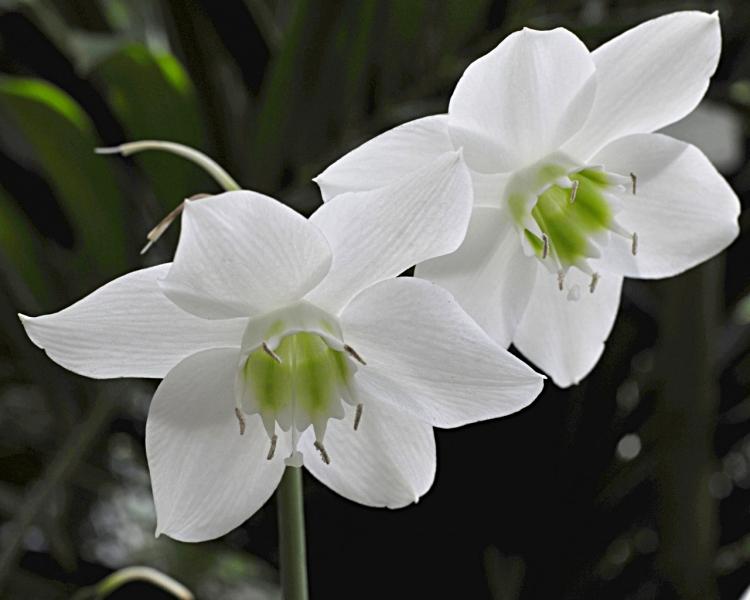 kukkia-kevat-2t