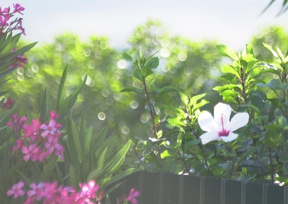 kukkia-vastavaloon-aamulla