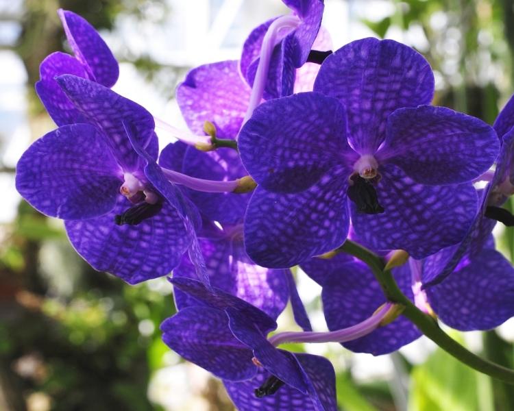 orchids-1280-x-1024