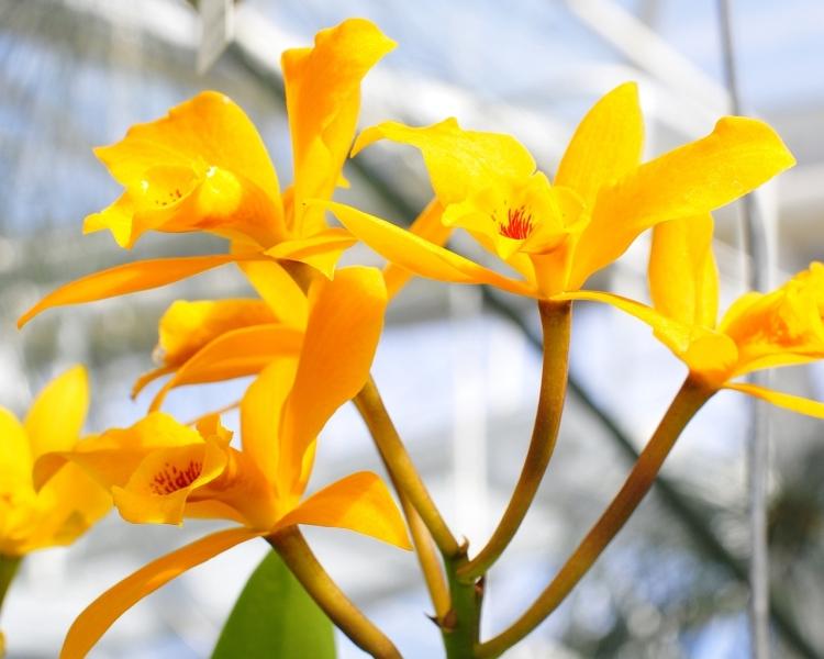orchids-2-1280-x-1024