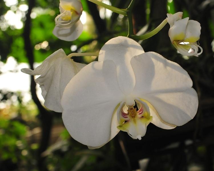 orkidea-2010