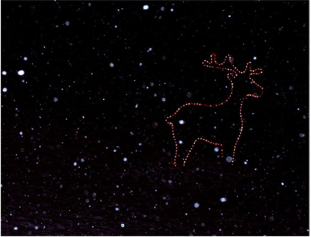 poro-jouluna-2004