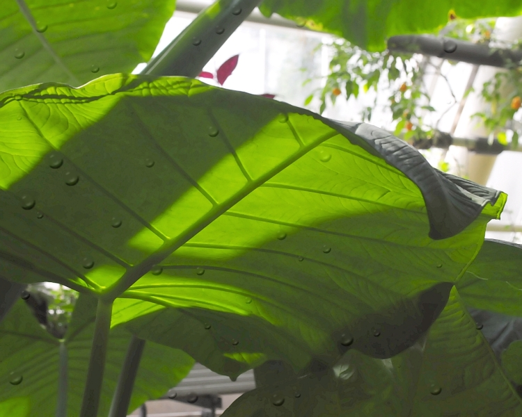 vihreat-lehdet